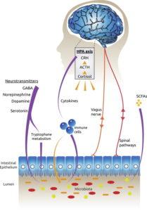wykres probiotyki depresja lęk